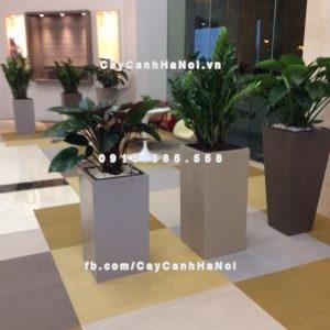 Chậu nhựa trồng cây composite iPot sang trọng ( IP-00020 )