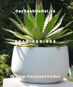 Chậu trồng cây composite iPot oval ( IP-00055)