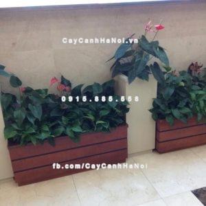 Chậu trồng cây composite iPot sang trọng ( IP-00019 )