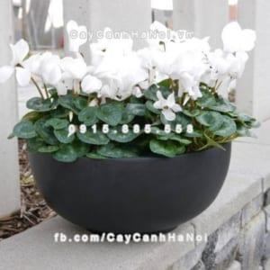Chậu trồng cây composite iPot sang trọng ( IP-00038)