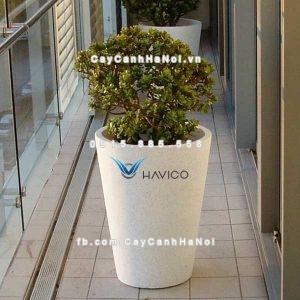 Chậu đá mài Pack Havico tròn trồng cây cảnh| CM-258