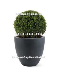 Chậu nhựa trồng cây composite Havico Luca  CB-321
