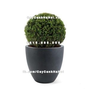 Chậu nhựa trồng cây composite Havico Luca| CB-321