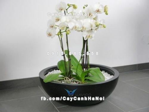 Chậu trồng cây composite Havico Tapi đẹp| C-313
