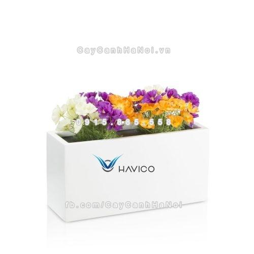 Chậu nhựa composite Havico Visio chữ nhật| C-319