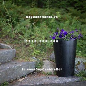 Chậu cây composite Havico Ciga đẳng cấp| HVC-00010