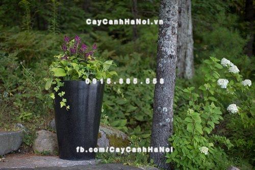 Chậu composite Havico Ciga đẹp| HVC-00009