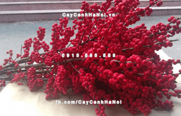 canh_hoa_dao_dong_choi_tet (1)