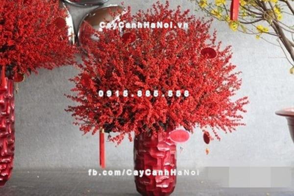 canh_hoa_dao_dong_choi_tet (3)