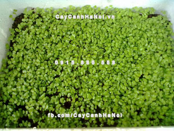 da_vermiculite_vo_mi (4)