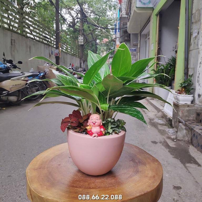 Bạch Mã Hoàng Tử - Mệnh Mộc hợp cây gì
