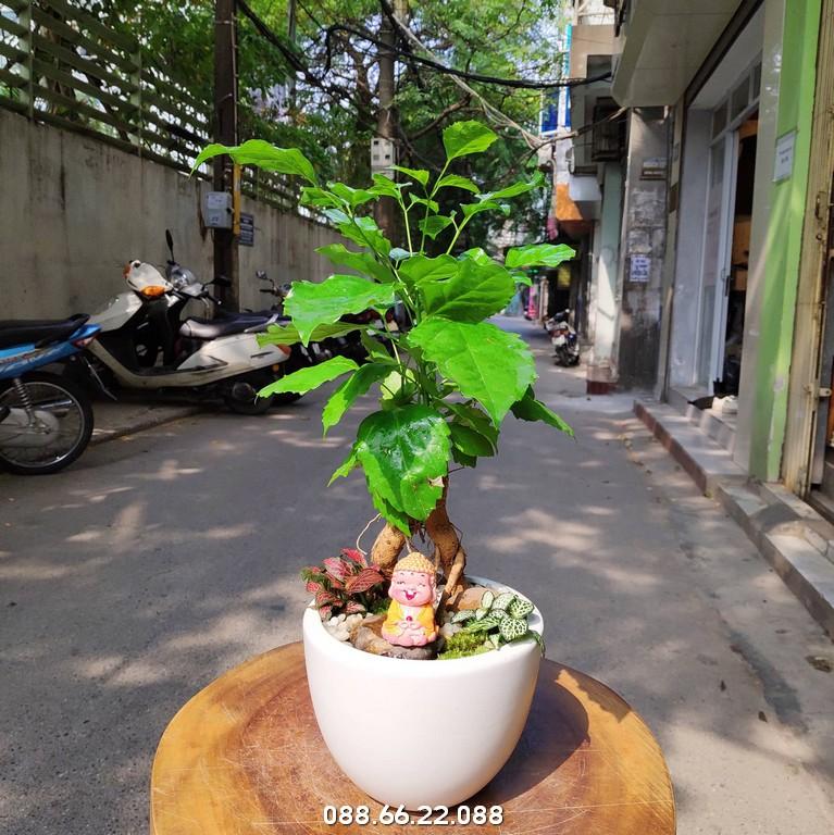 Tuổi Dần hợp cây gì