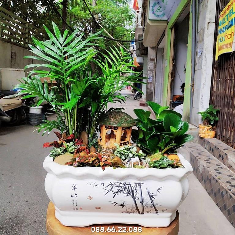 Cây cau tiểu trâm - cây phong thủy cho người mệnh Thủy