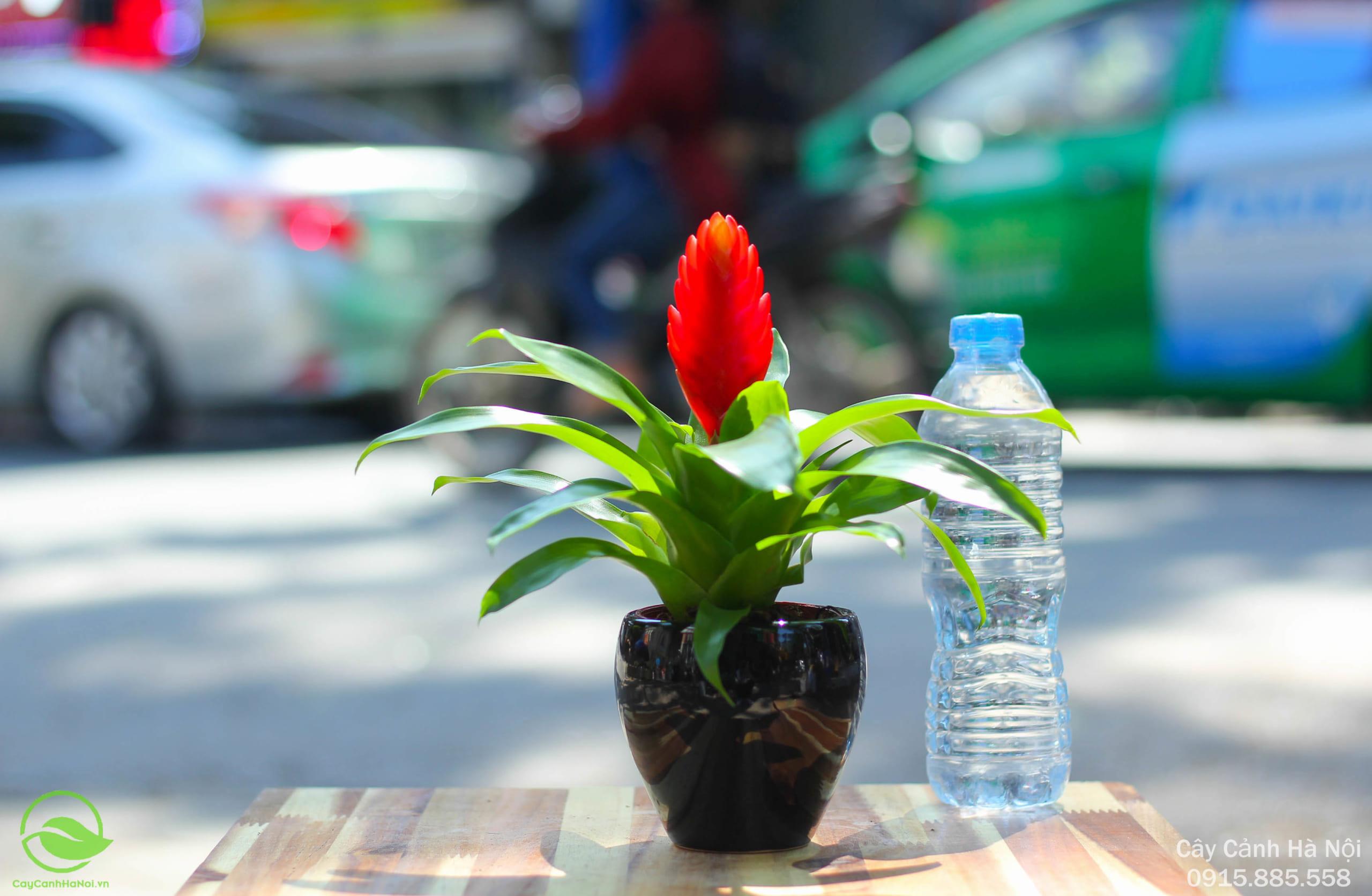 Phong Lộc Hoa - Tuổi Dần hợp cây gì