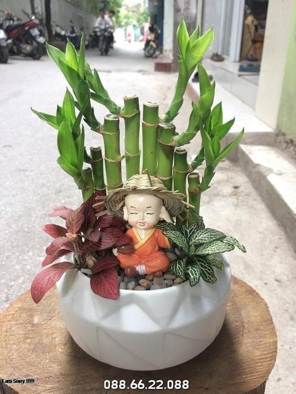 Cây Phát Lộc - Cây cảnh tuổi Sửu