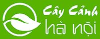 Cây cảnh Hà Nội