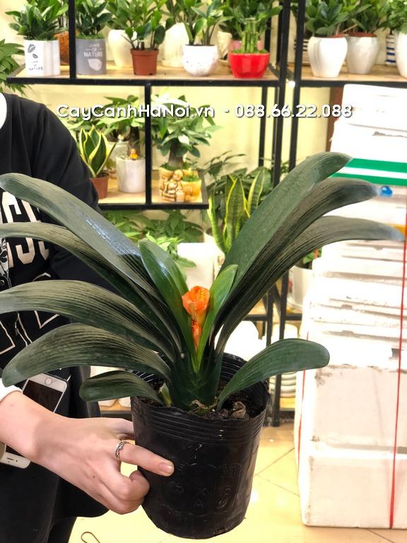 Lan Quân Tử - Tuổi Tuất hợp cây gì