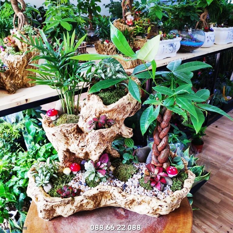 Cây Kim Ngân - Tuổi Tỵ hợp cây gì