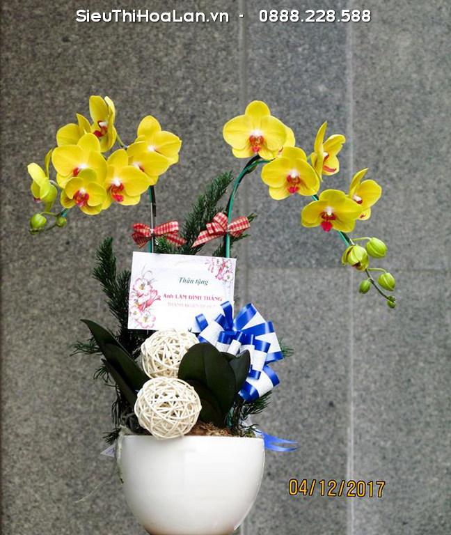 Hoa lan hồ điệp vàng - cây phong thủy may mắn cho người tuổi Dậu mệnh Kim