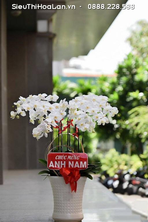 Cây hoa lan hồ điệp màu trắng